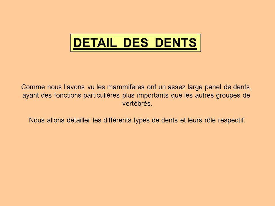 DETAIL DES DENTS