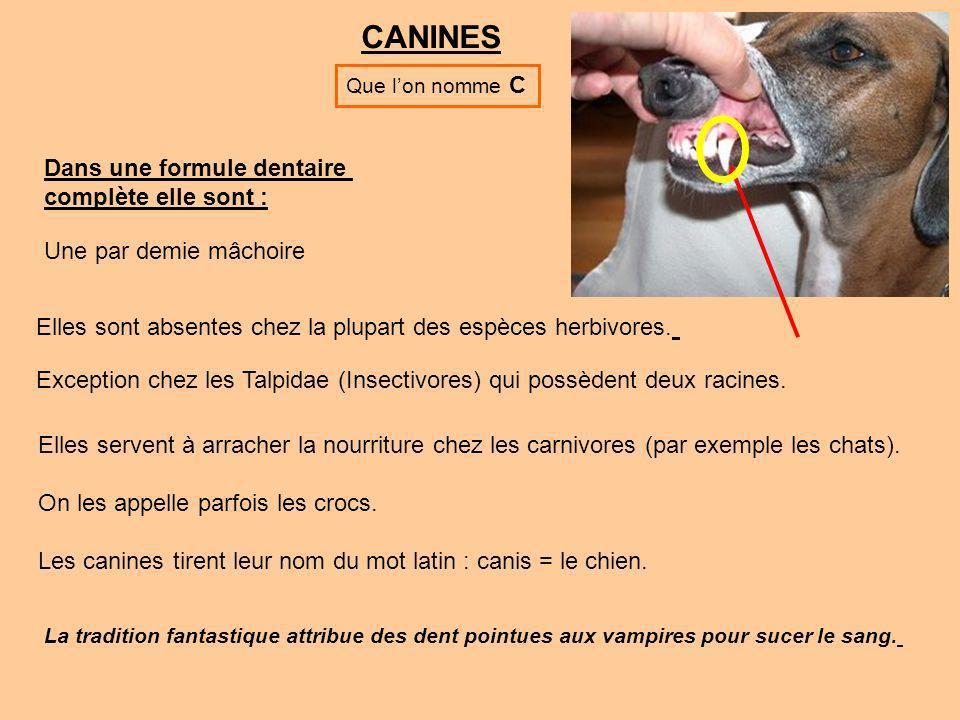 CANINES Dans une formule dentaire complète elle sont :