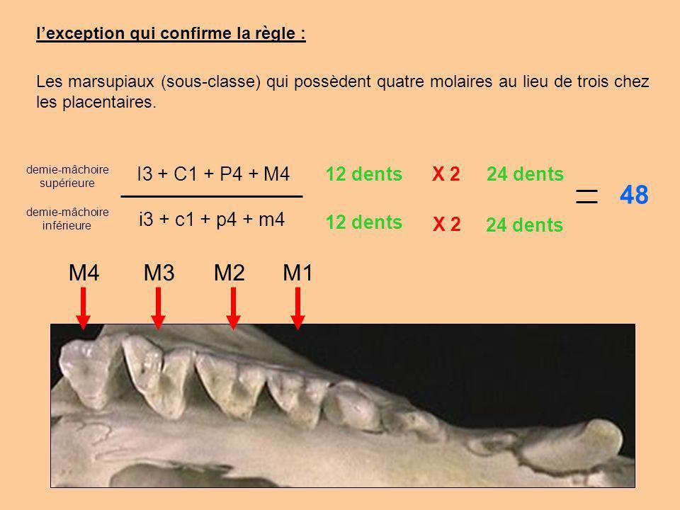 48 M4 M3 M2 M1 I3 + C1 + P4 + M4 12 dents X 2 24 dents