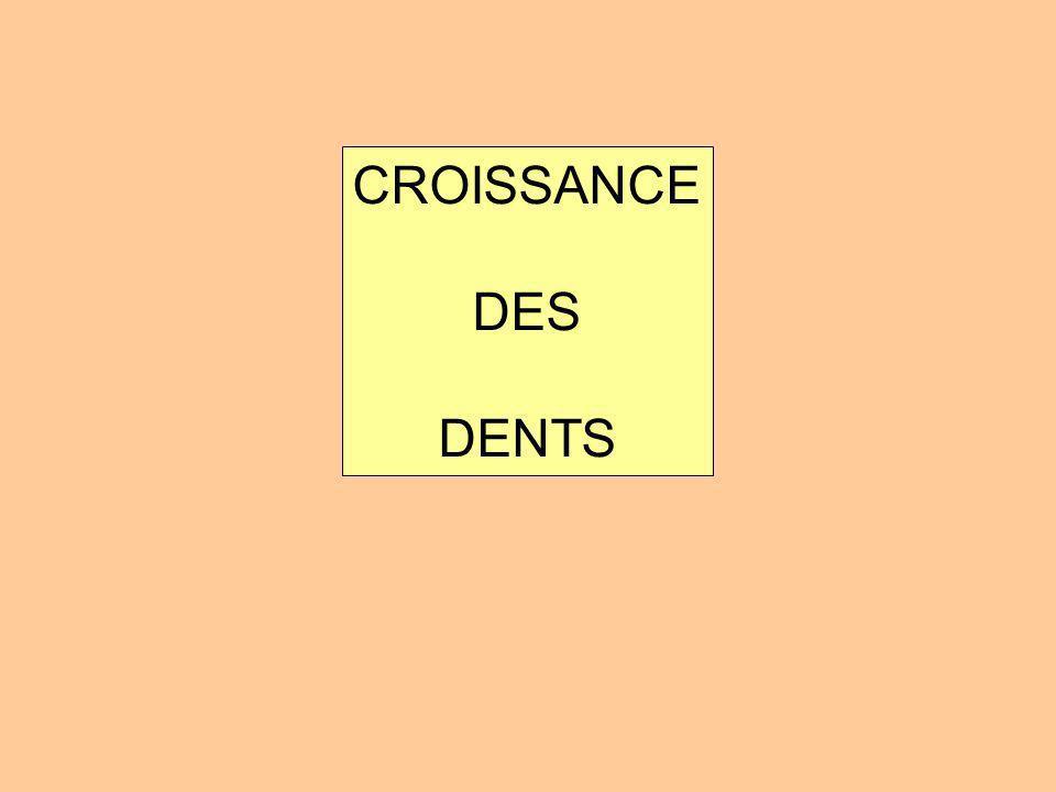 CROISSANCE DES DENTS