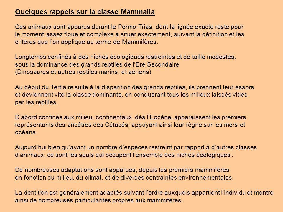 Quelques rappels sur la classe Mammalia