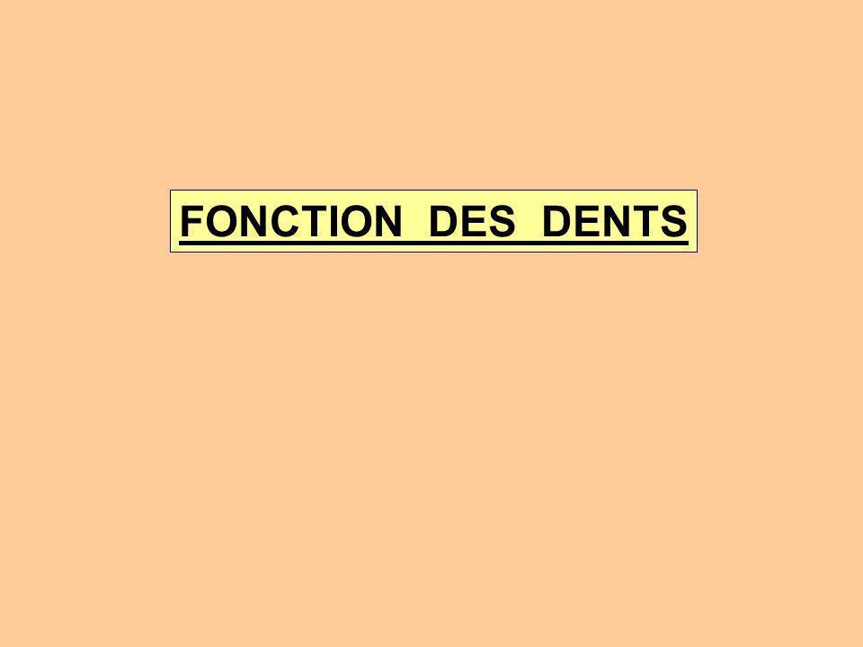 FONCTION DES DENTS