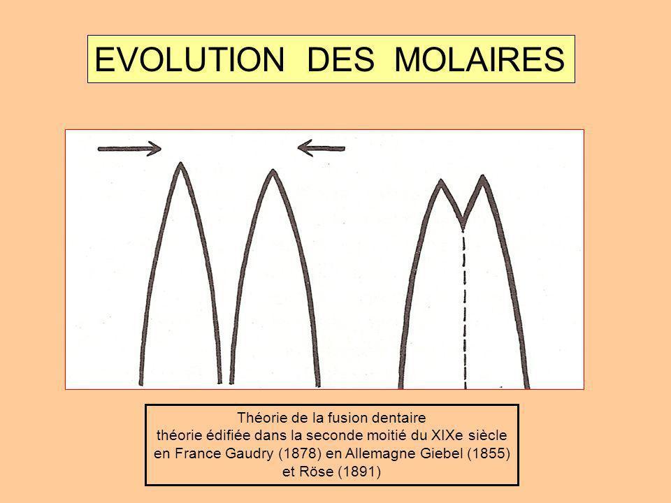 EVOLUTION DES MOLAIRES