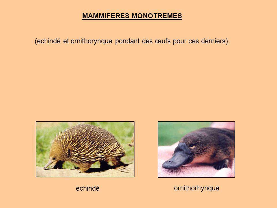 MAMMIFERES MONOTREMES