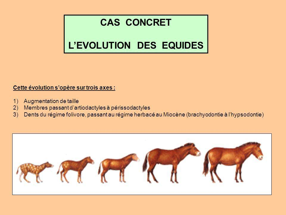L'EVOLUTION DES EQUIDES