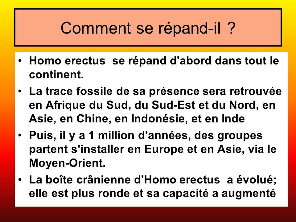 Comment se répand-il Homo erectus se répand d abord dans tout le continent.