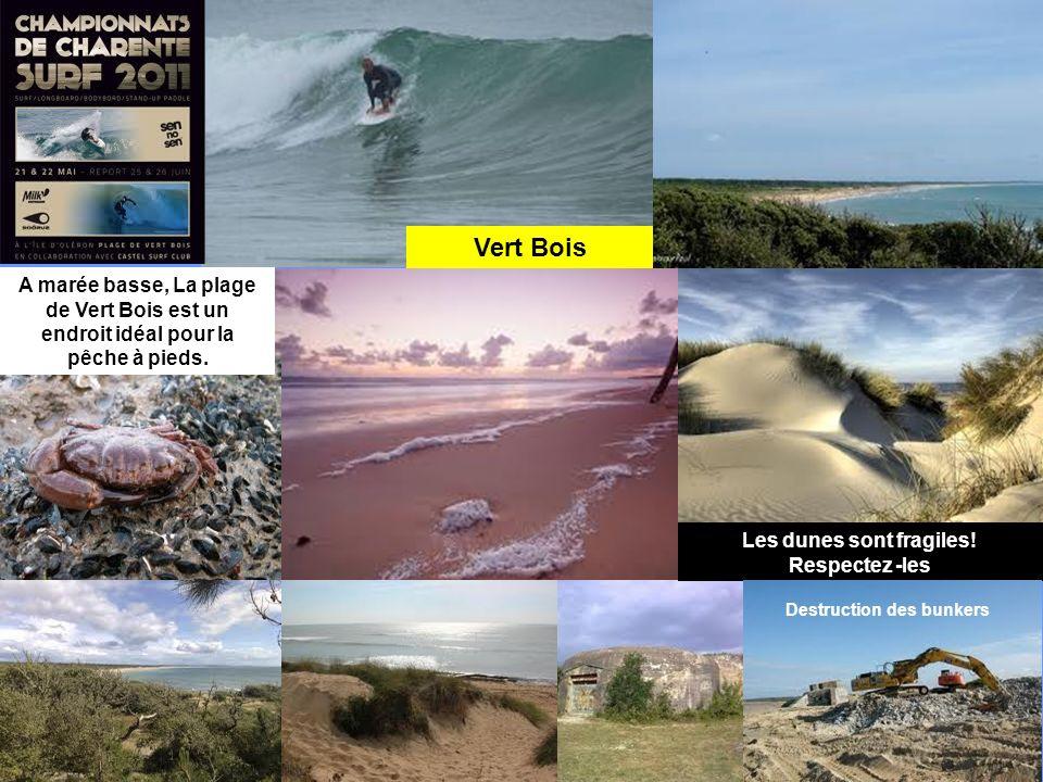 Les dunes sont fragiles! Respectez -les Destruction des bunkers