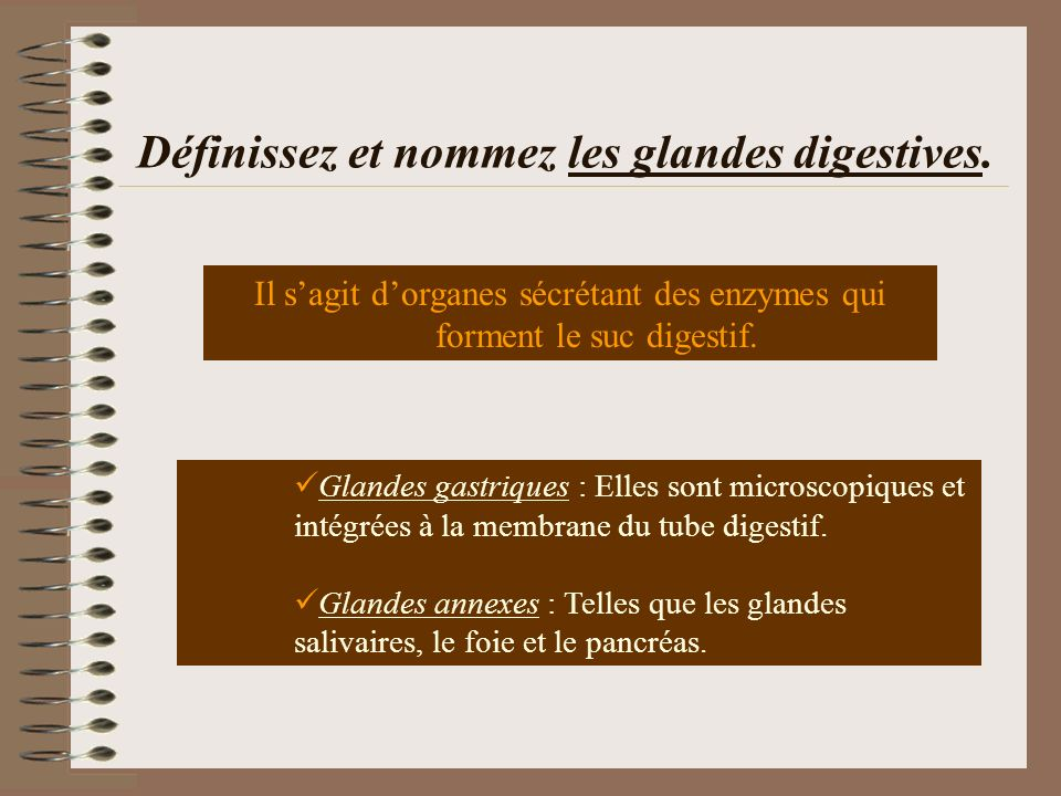 Définissez et nommez les glandes digestives.
