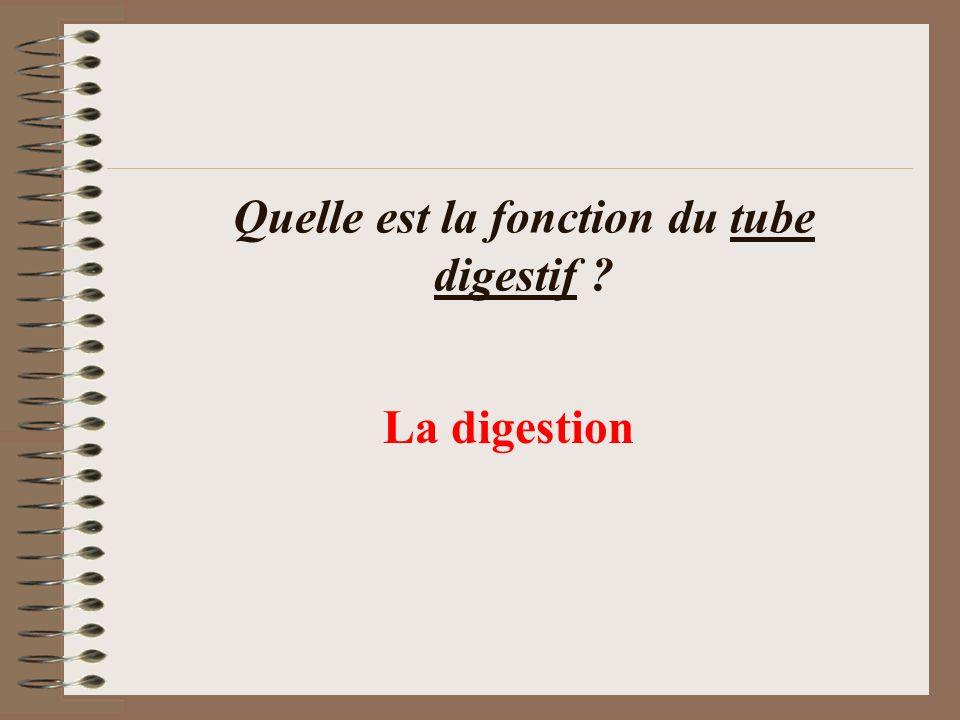 Quelle est la fonction du tube digestif