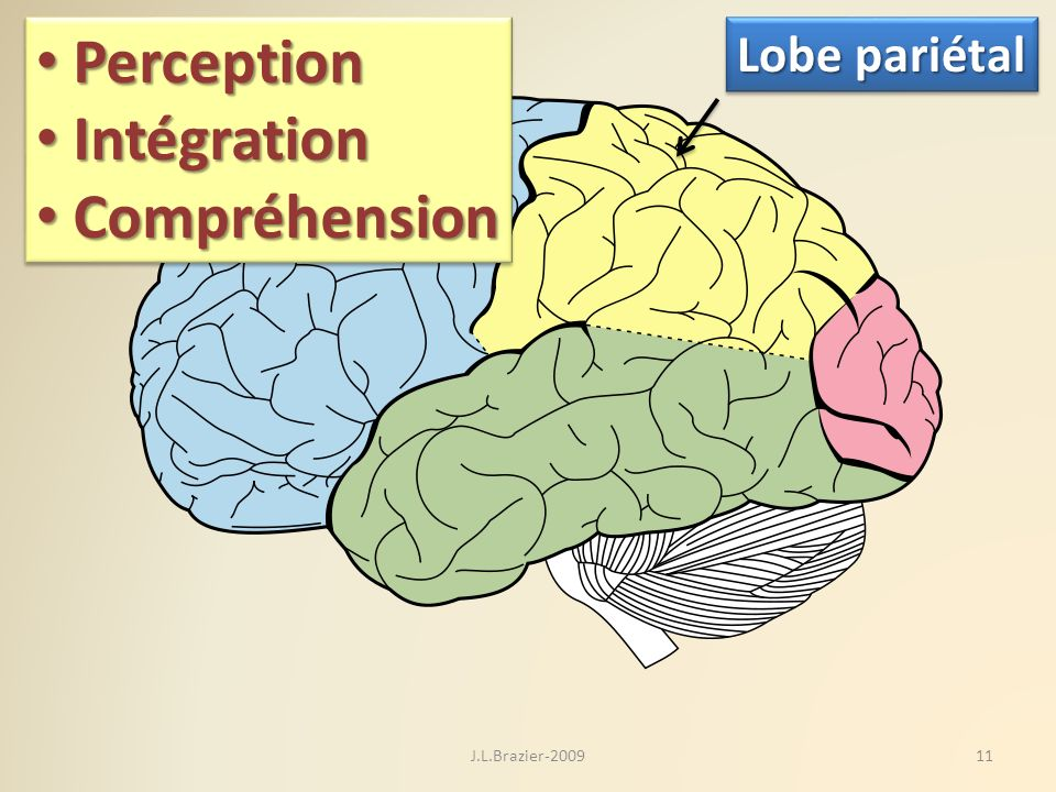 Perception Intégration Compréhension Lobe pariétal J.L.Brazier-2009