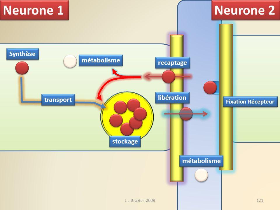 Neurone 1 Neurone 2 Synthèse métabolisme recaptage libération
