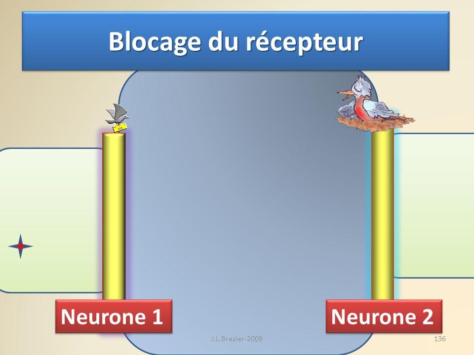 Blocage du récepteur Neurone 1 Neurone 2 J.L.Brazier-2009