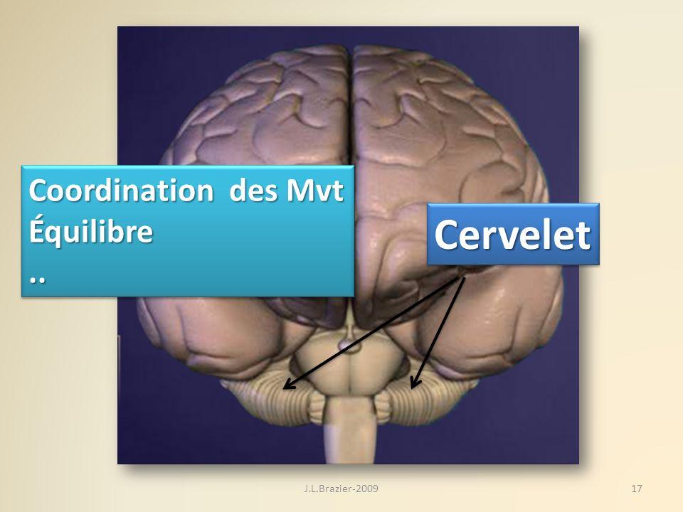 Coordination des Mvt Équilibre .. Cervelet J.L.Brazier-2009