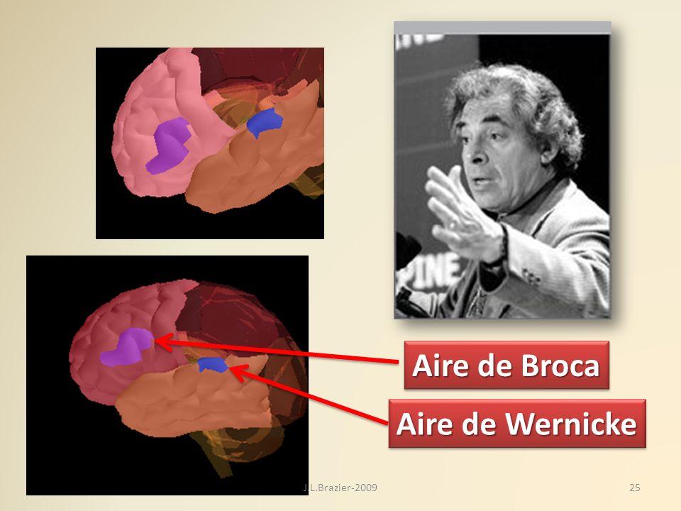 Aire de Broca Aire de Wernicke