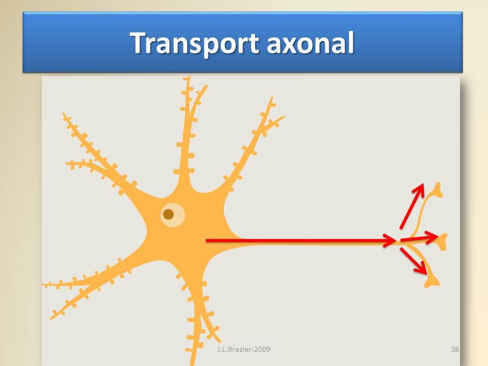 Transport axonal J.L.Brazier-2009
