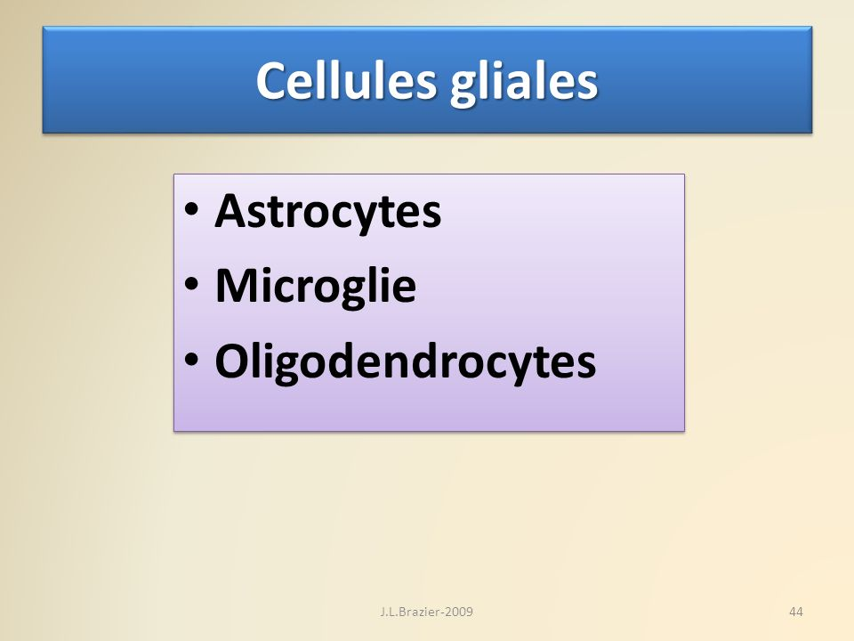 Cellules gliales Astrocytes Microglie Oligodendrocytes