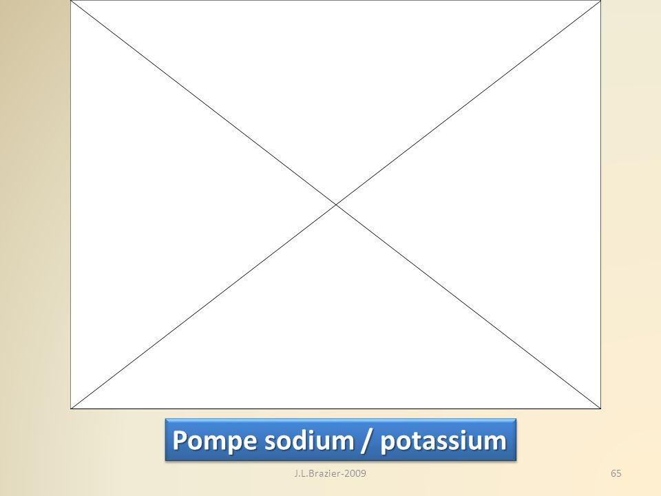 Pompe sodium / potassium