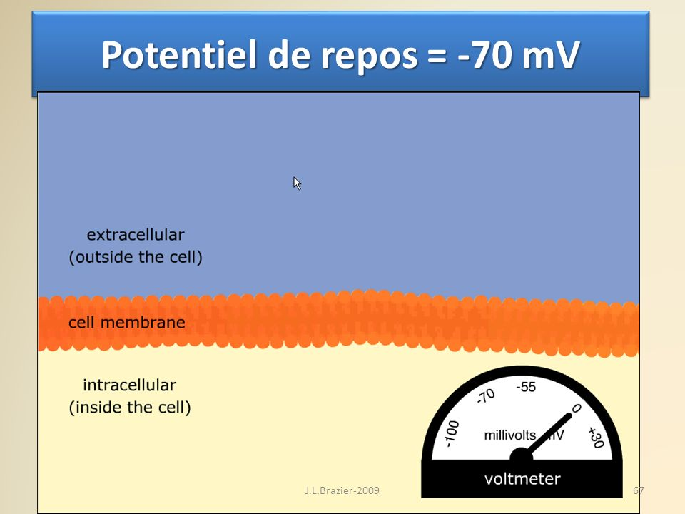 Potentiel de repos = -70 mV