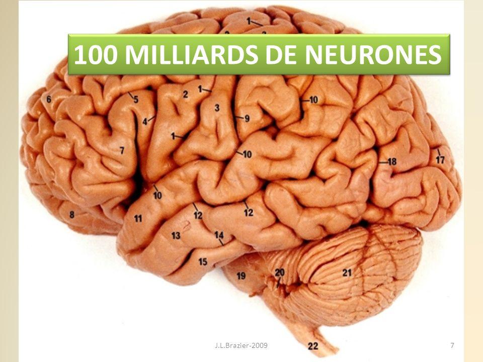 100 MILLIARDS DE NEURONES J.L.Brazier-2009