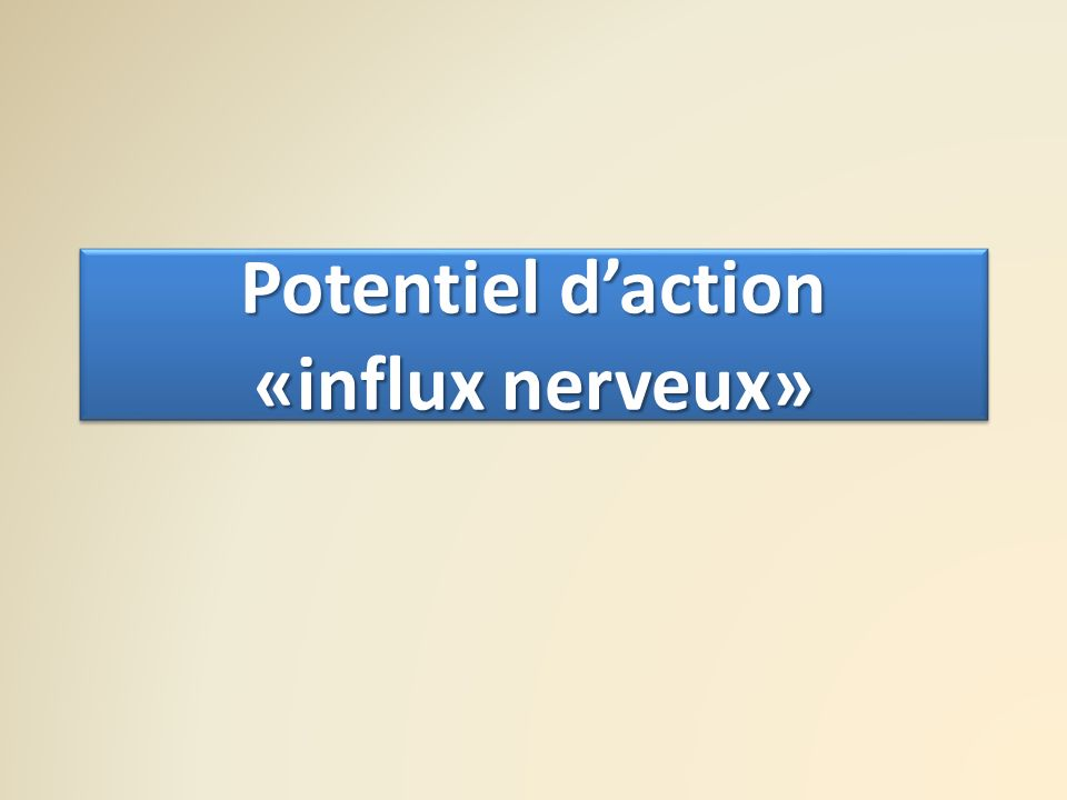 Potentiel d'action «influx nerveux»
