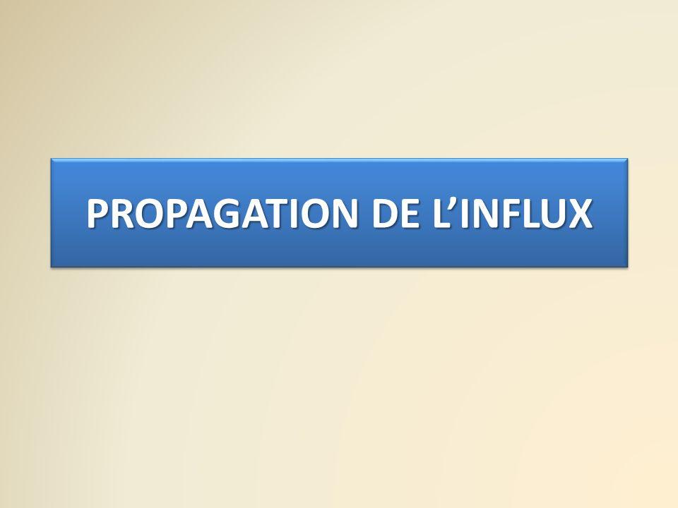 PROPAGATION DE L'INFLUX