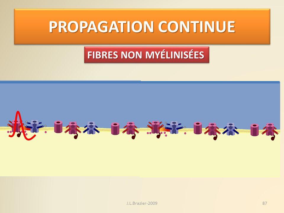 PROPAGATION CONTINUE FIBRES NON MYÉLINISÉES J.L.Brazier-2009
