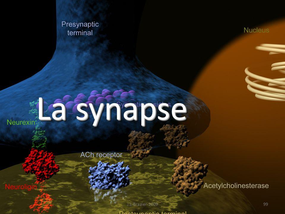 La synapse J.L.Brazier-2009