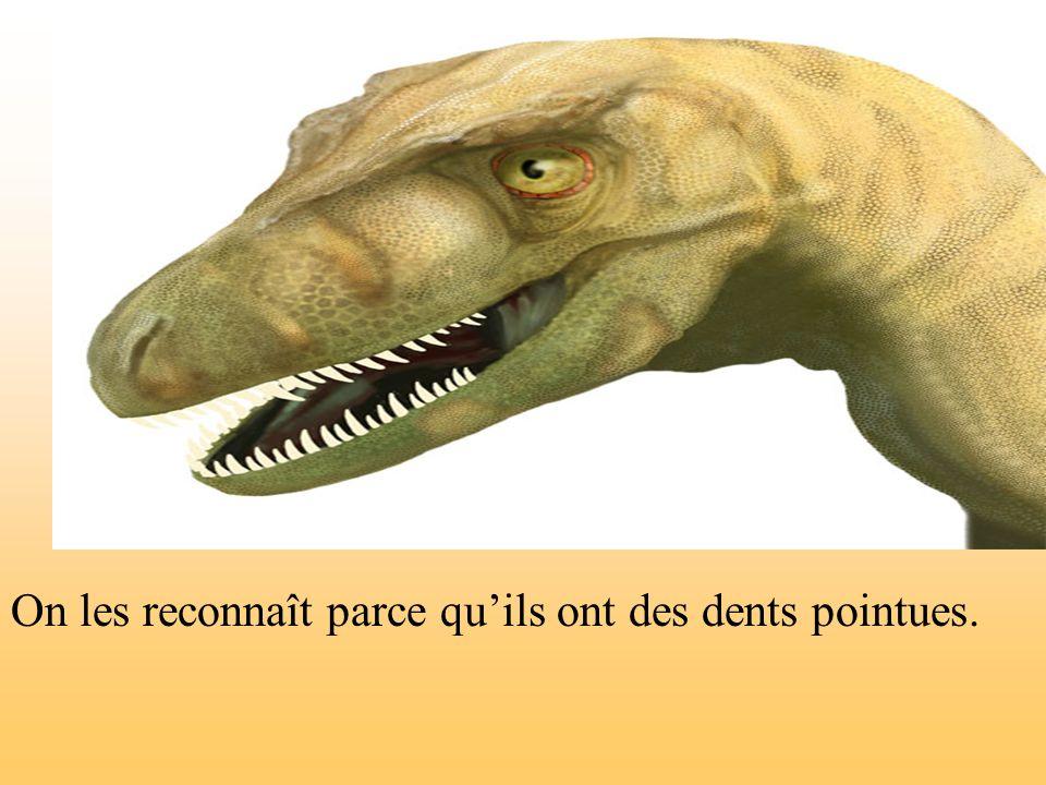 On les reconnaît parce qu'ils ont des dents pointues.