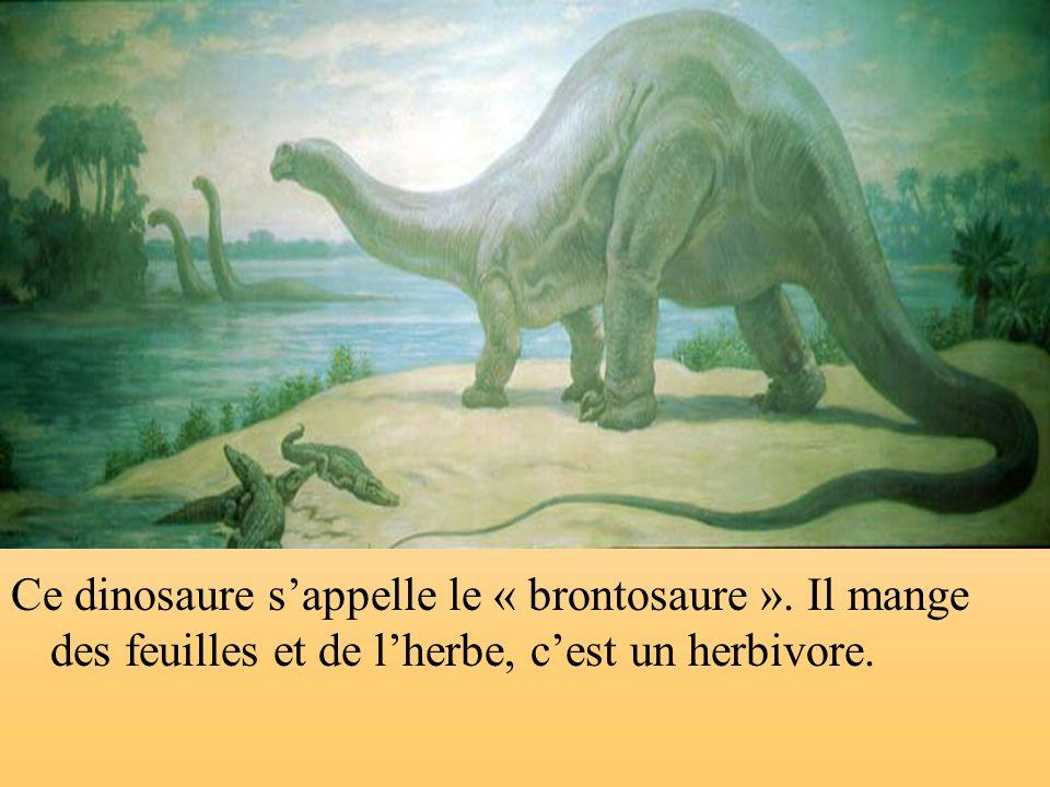 Ce dinosaure s'appelle le « brontosaure »