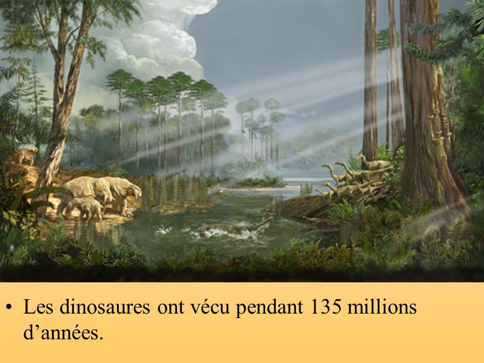 Les dinosaures ont vécu pendant 135 millions d'années.