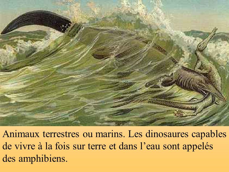Animaux terrestres ou marins