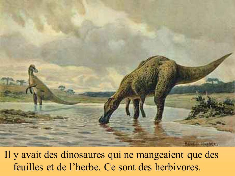 Il y avait des dinosaures qui ne mangeaient que des feuilles et de l'herbe. Ce sont des herbivores.