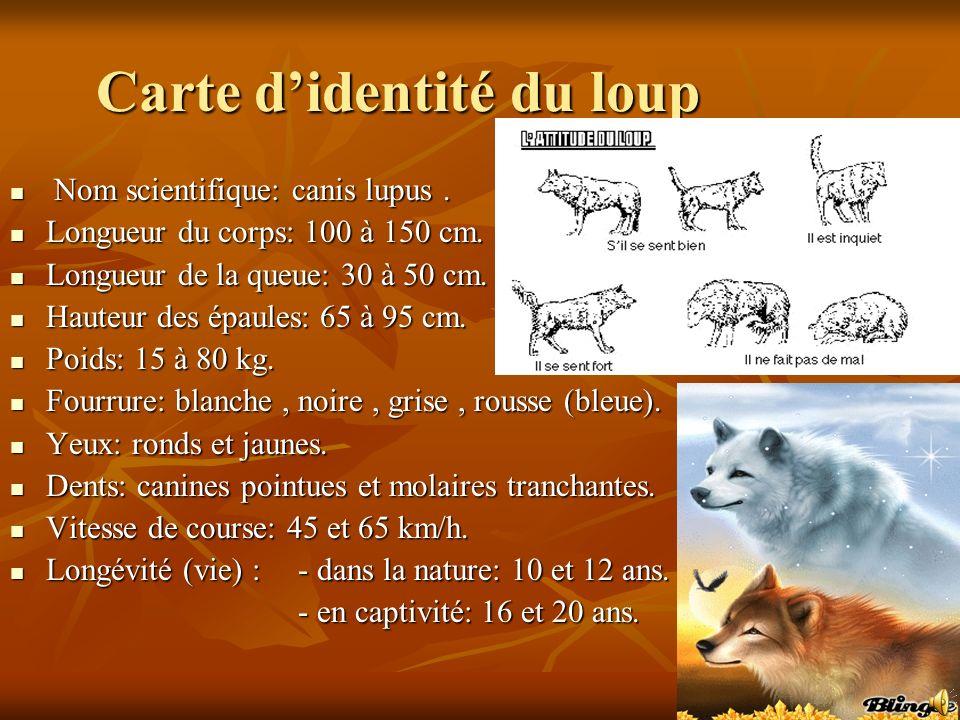 Carte d'identité du loup