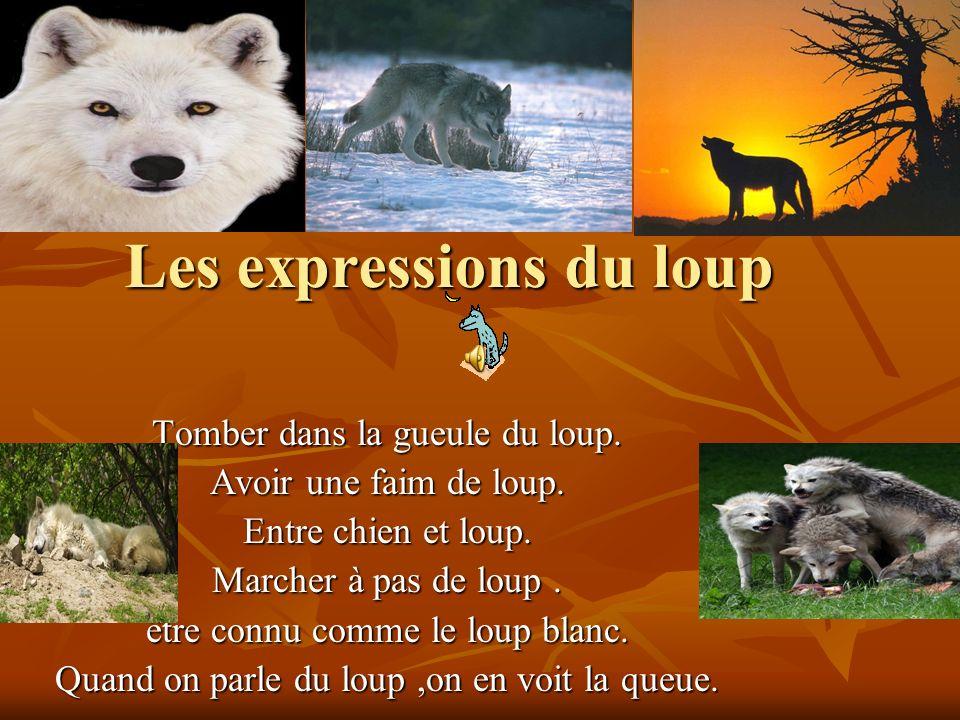 Les expressions du loup