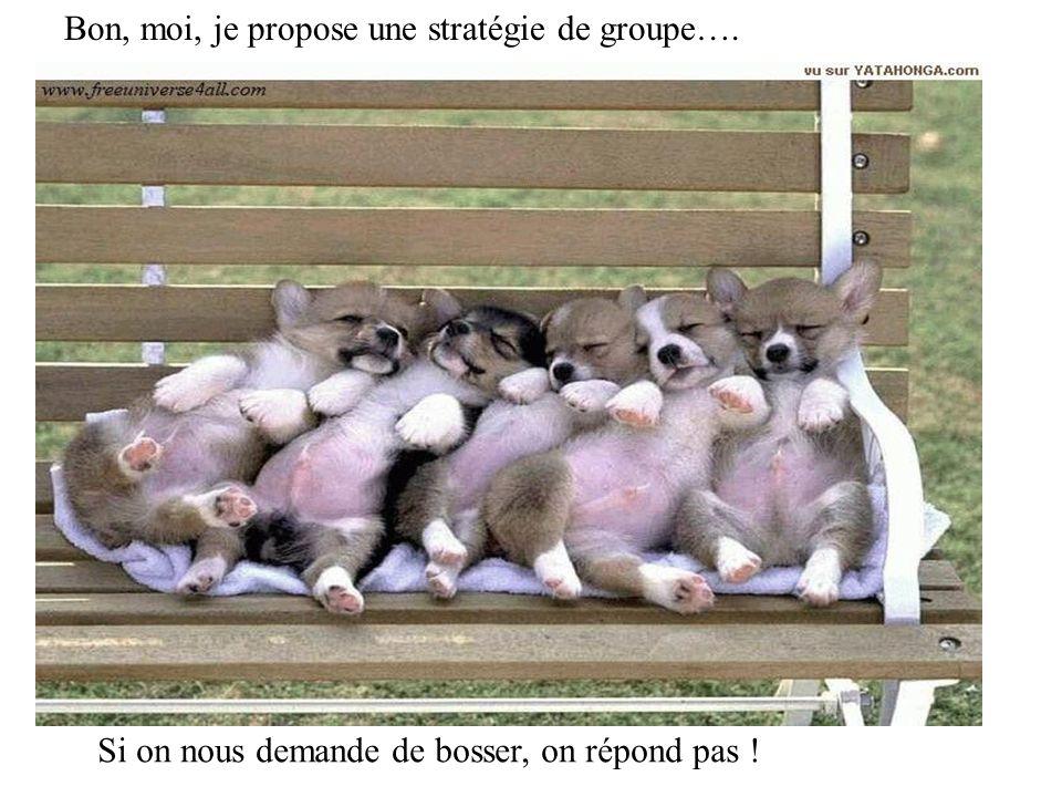 Bon, moi, je propose une stratégie de groupe….