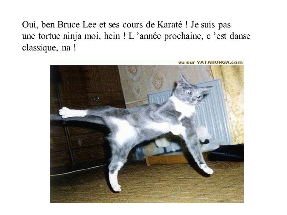 Oui, ben Bruce Lee et ses cours de Karaté ! Je suis pas