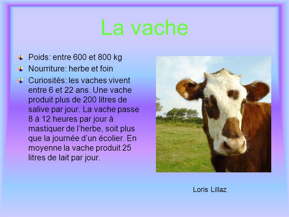 La vache Poids: entre 600 et 800 kg Nourriture: herbe et foin