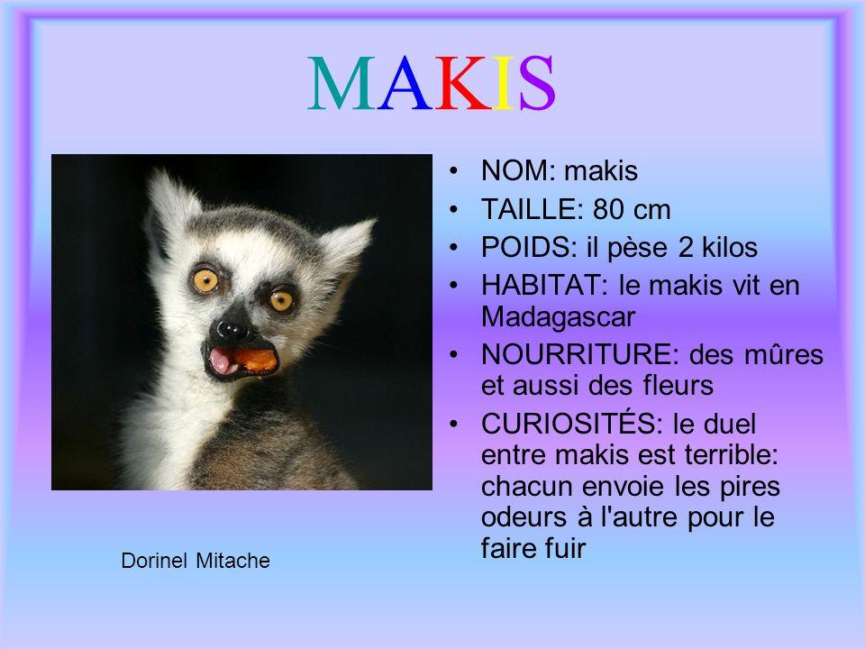 MAKIS NOM: makis TAILLE: 80 cm POIDS: il pèse 2 kilos
