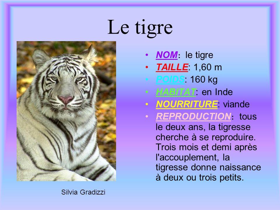 Le tigre NOM: le tigre TAILLE: 1,60 m POIDS: 160 kg HABITAT: en Inde