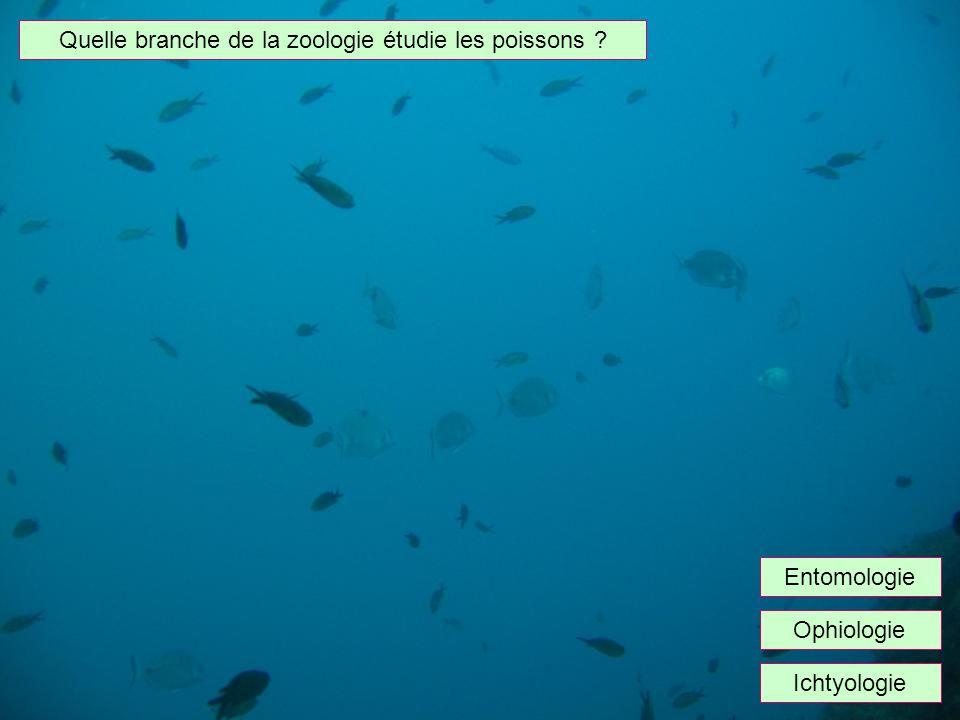 Quelle branche de la zoologie étudie les poissons