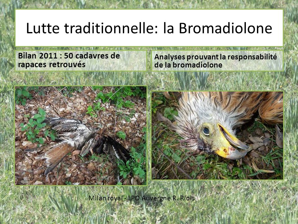 Lutte traditionnelle: la Bromadiolone