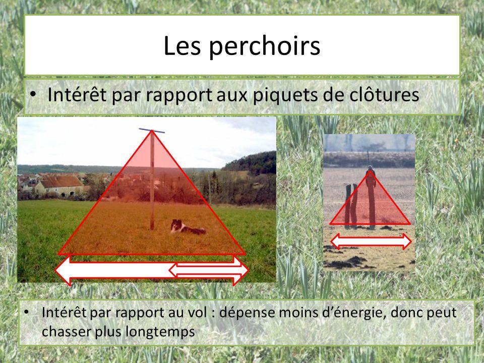 Les perchoirs Intérêt par rapport aux piquets de clôtures