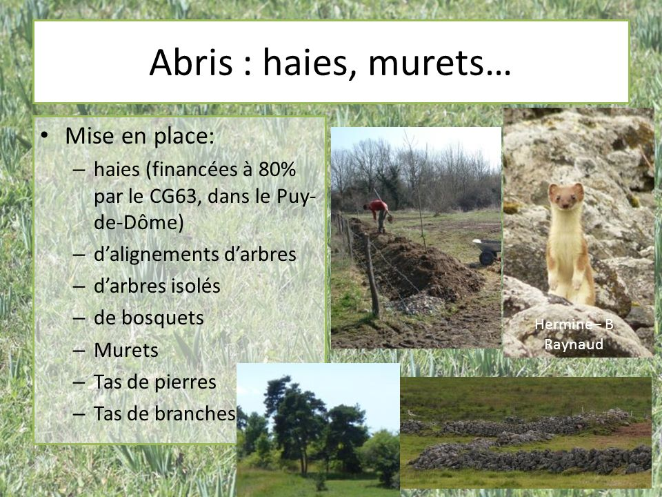 Abris : haies, murets… Mise en place: