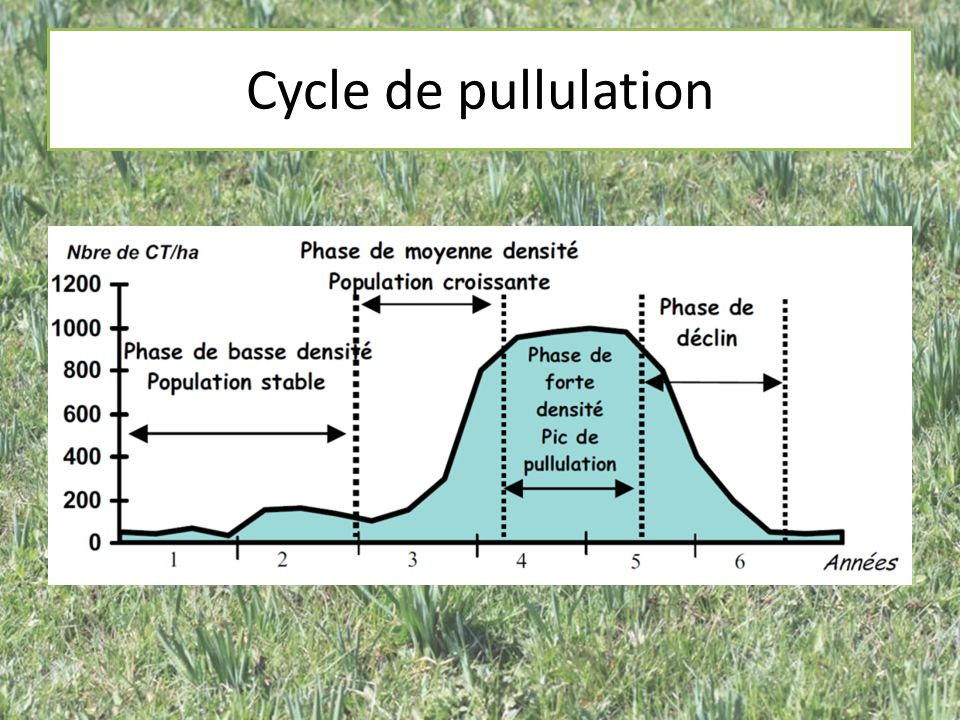 Cycle de pullulation