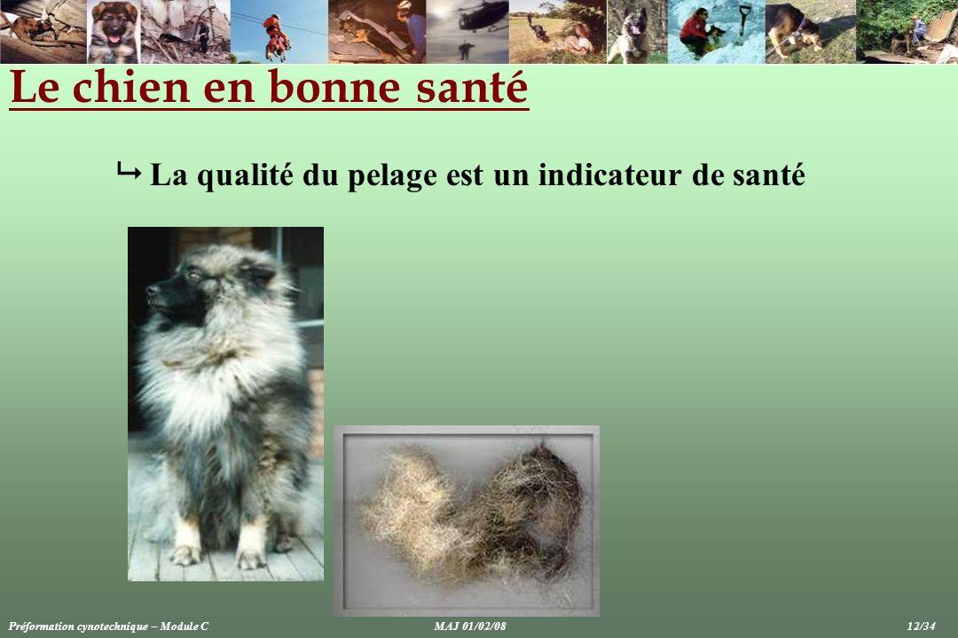 Le chien en bonne santé  La qualité du pelage est un indicateur de santé.