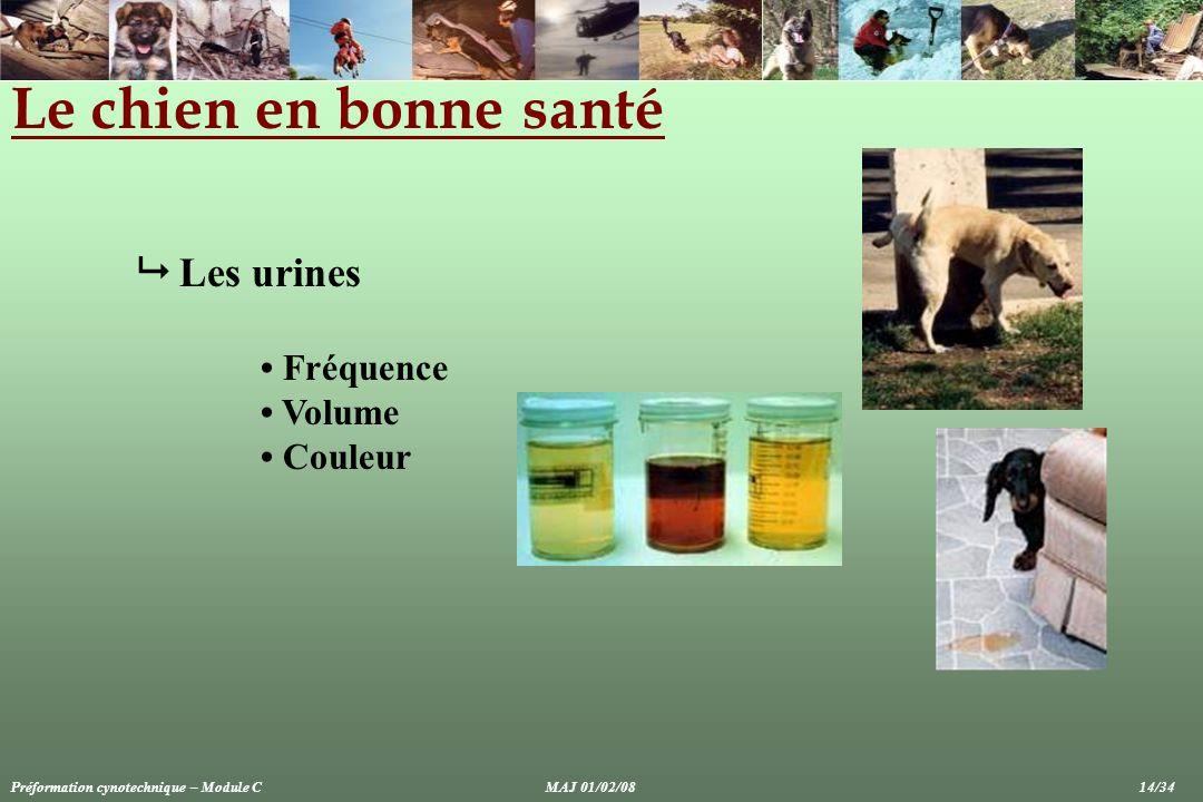 Le chien en bonne santé  Les urines • Fréquence • Volume • Couleur