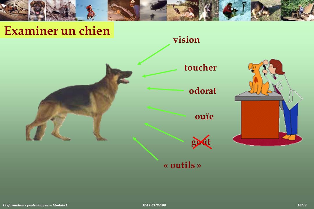 Examiner un chien vision toucher odorat ouïe goût « outils »