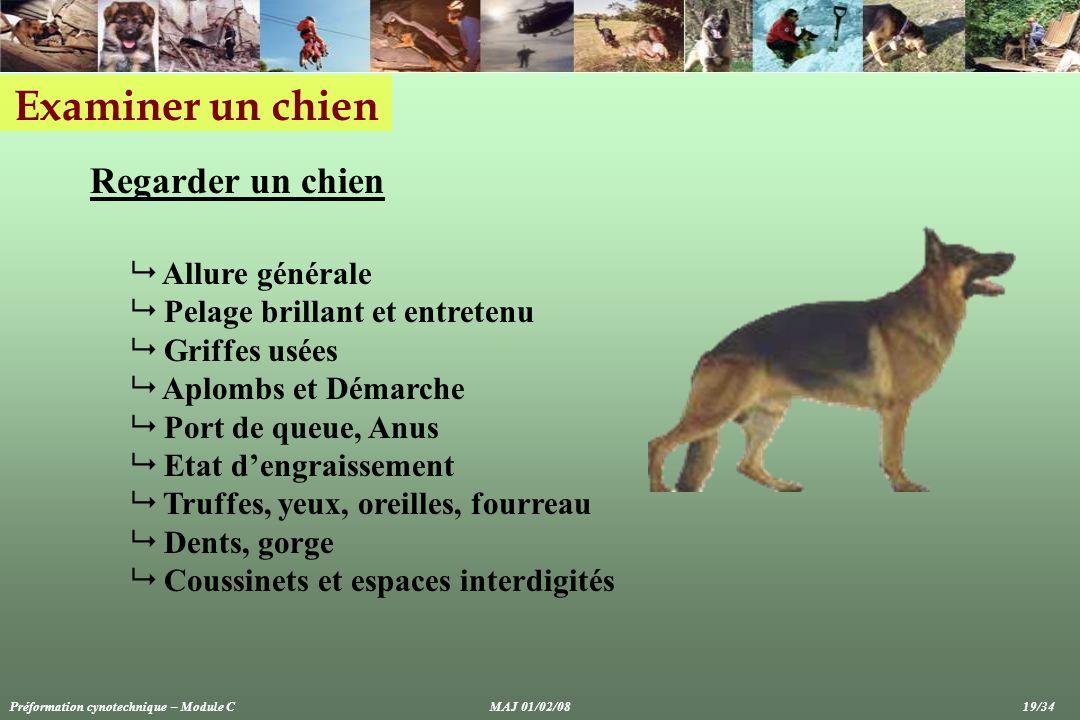 Examiner un chien Regarder un chien Allure générale