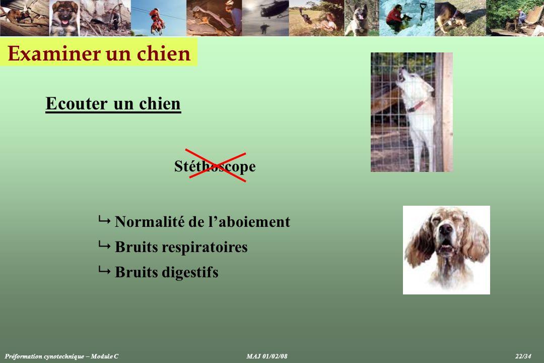Examiner un chien Ecouter un chien Stéthoscope