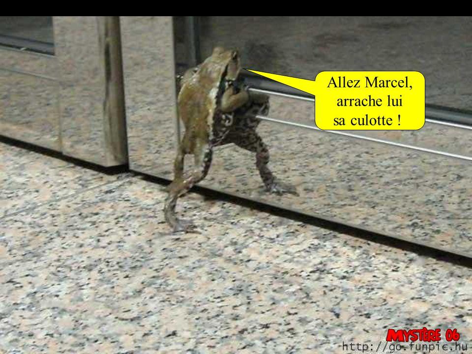 Allez Marcel, arrache lui sa culotte !
